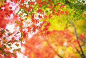 日本のある秋の森