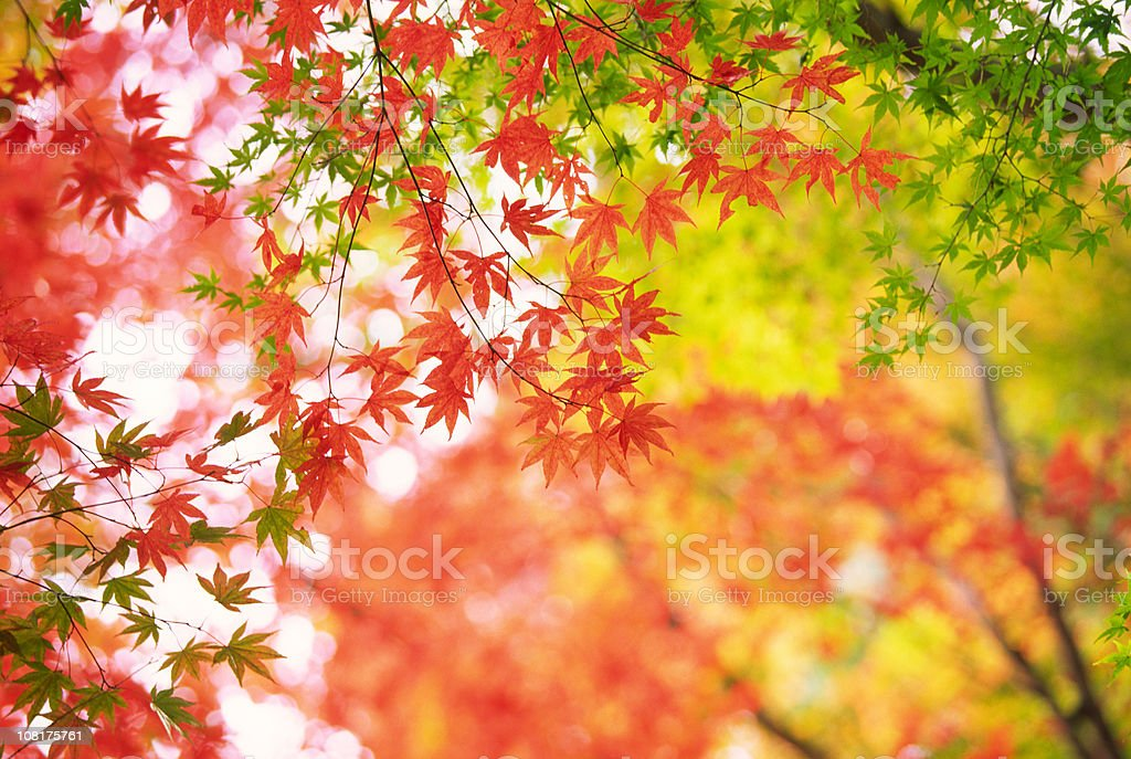 Japanese Autumn Forest stock photo