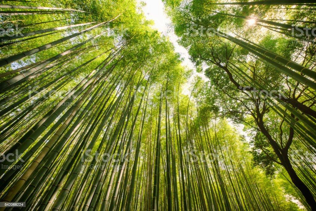 Foresta di bambù giapponese - foto stock