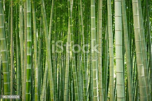 istock Japanese bamboo grove. 962839326