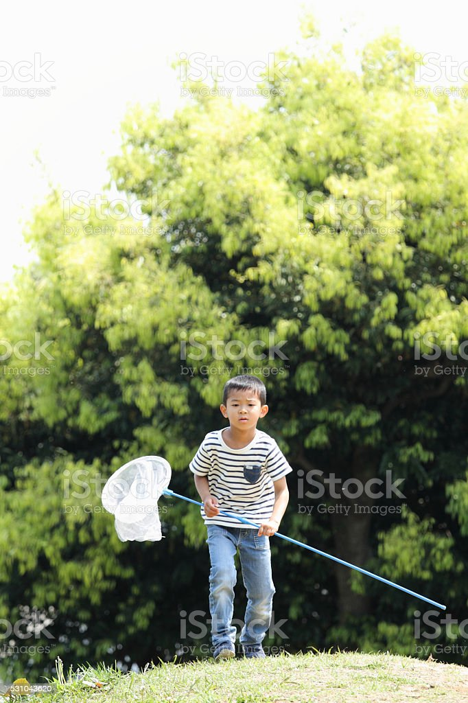 Japanese boy collecting insect (6 years old) stock photo