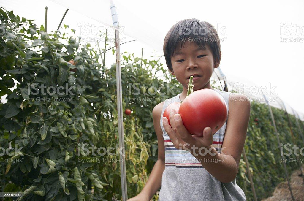 Japanese chłopiec trzyma pomidor zbiór zdjęć royalty-free
