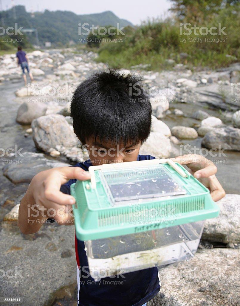 日本の少年望むプラスチック魚をタンク ロイヤリティフリーストックフォト