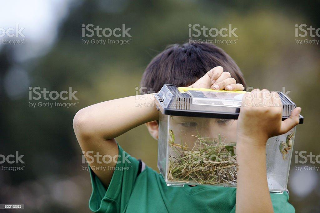 Japanese boy lookinig into a plastic insect box royaltyfri bildbanksbilder