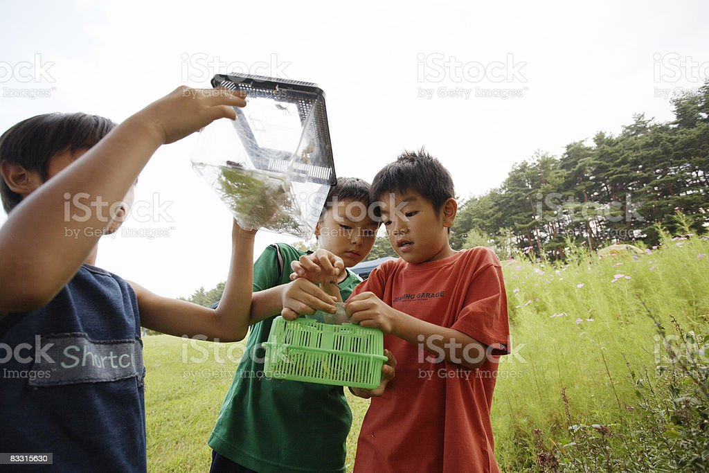 Japanese boys holding a plastic box with insects royalty free stockfoto