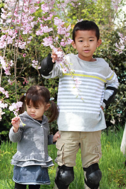 Japanese brother and sister (7 years old boy and 2 years old girl) and cherry blossoms stock photo