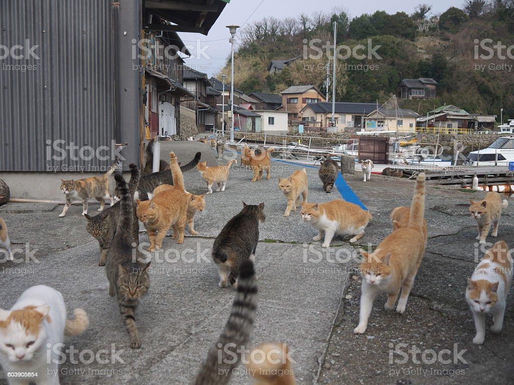 Japanese Cat Island stock photo
