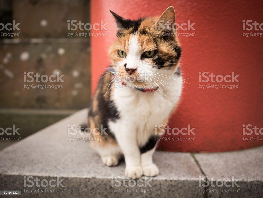 Japanese cat stock photo