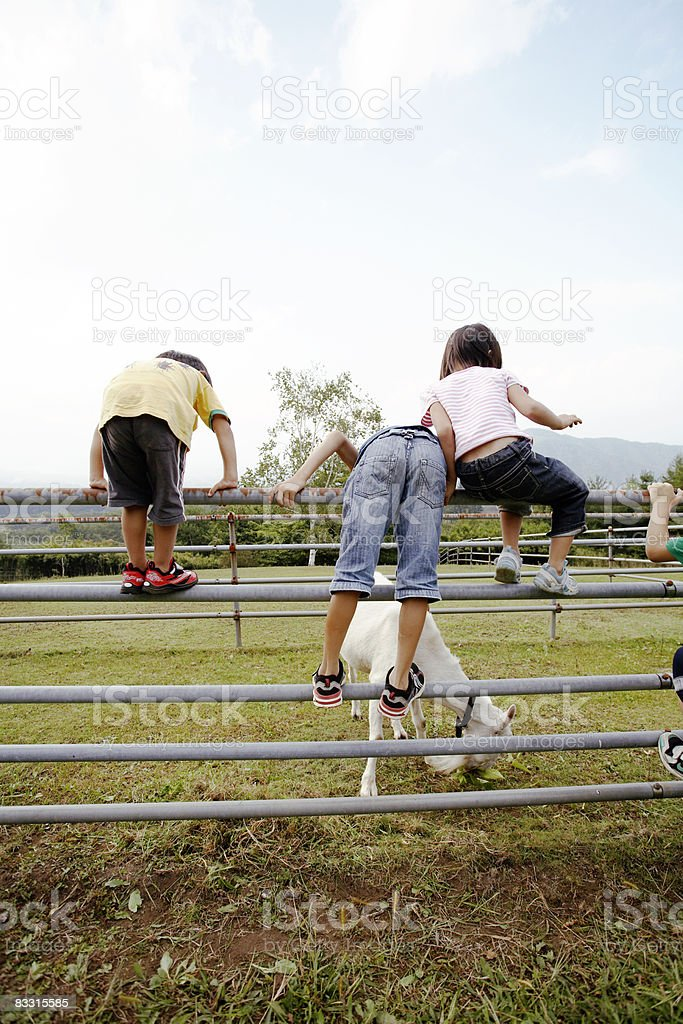 Giapponese bambini guardando le capre foto stock royalty-free