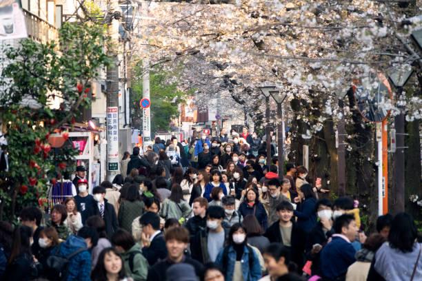 japanese crowds viewing cherry blossoms atmeguro river, tokyo - cherry blossoms imagens e fotografias de stock