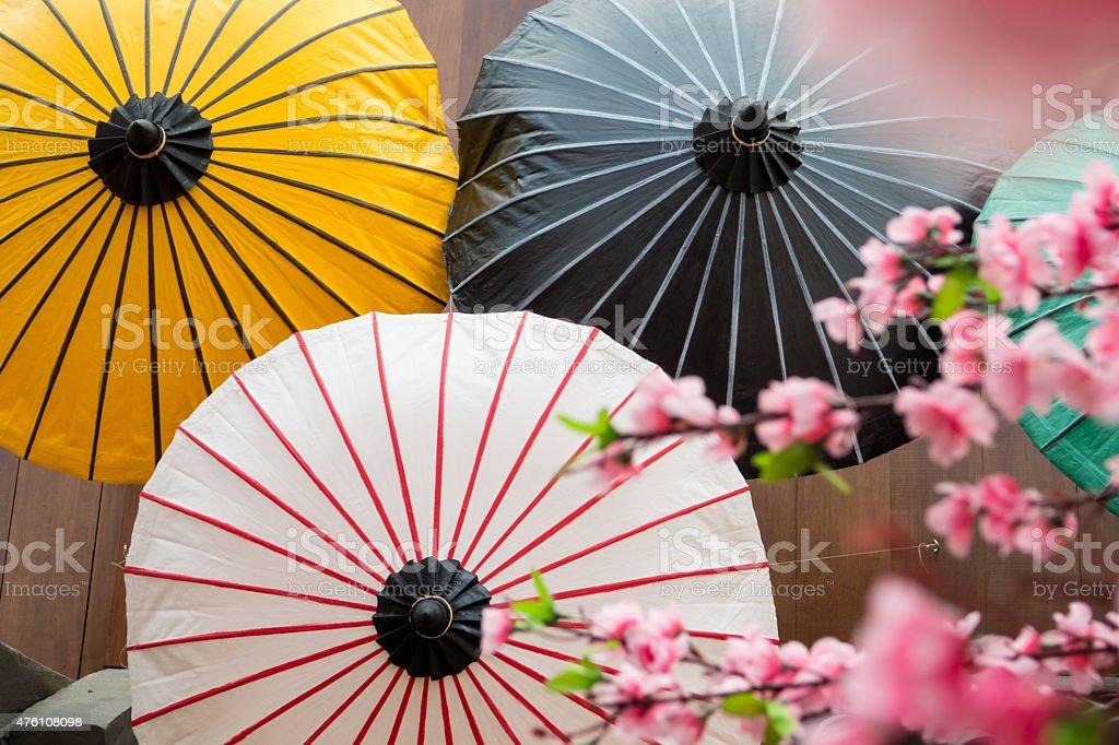 sakura blossom and paper umbrella are japanese signature