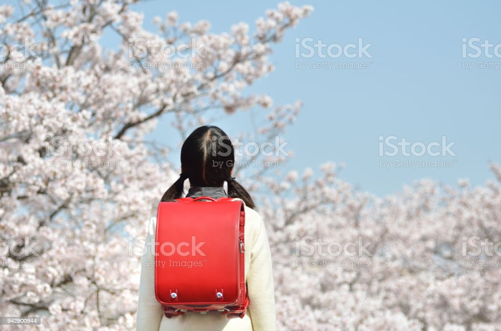 Japanese elementary school student (cherry, graduation) stock photo