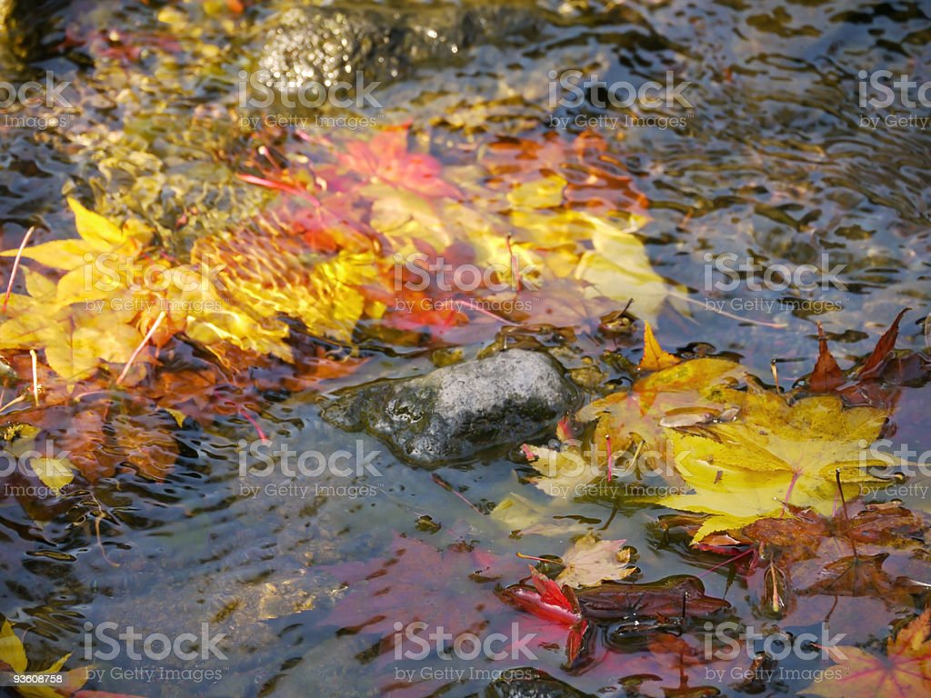 Japanese fall foliage: autumn leaves in water royalty-free stock photo