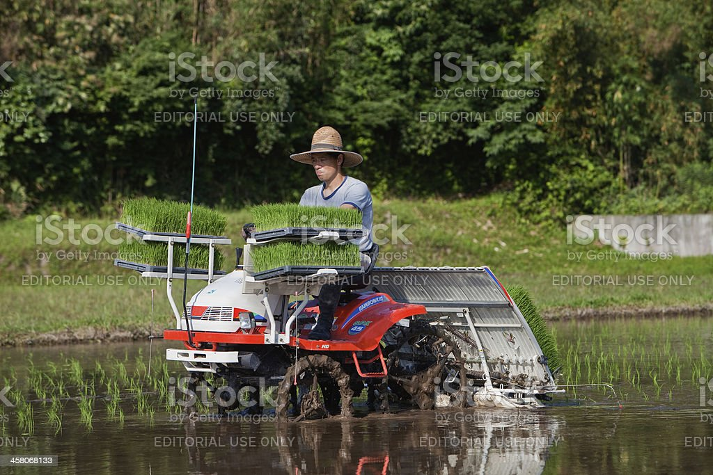 Japanese farmer on tractor planting rice shoots royalty-free stock photo