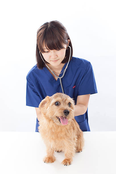 Japanese female doctor with a dog picture id611103758?b=1&k=6&m=611103758&s=612x612&w=0&h=pjd4vykalc7nthqlfmb8wurdoz4um9d6cbzwrcun5ve=