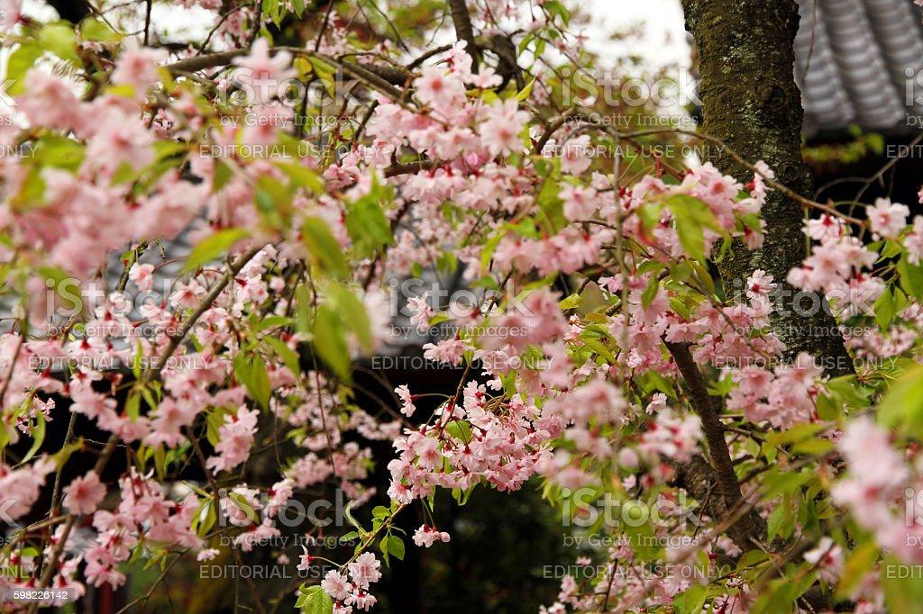 Flores japonês foto royalty-free