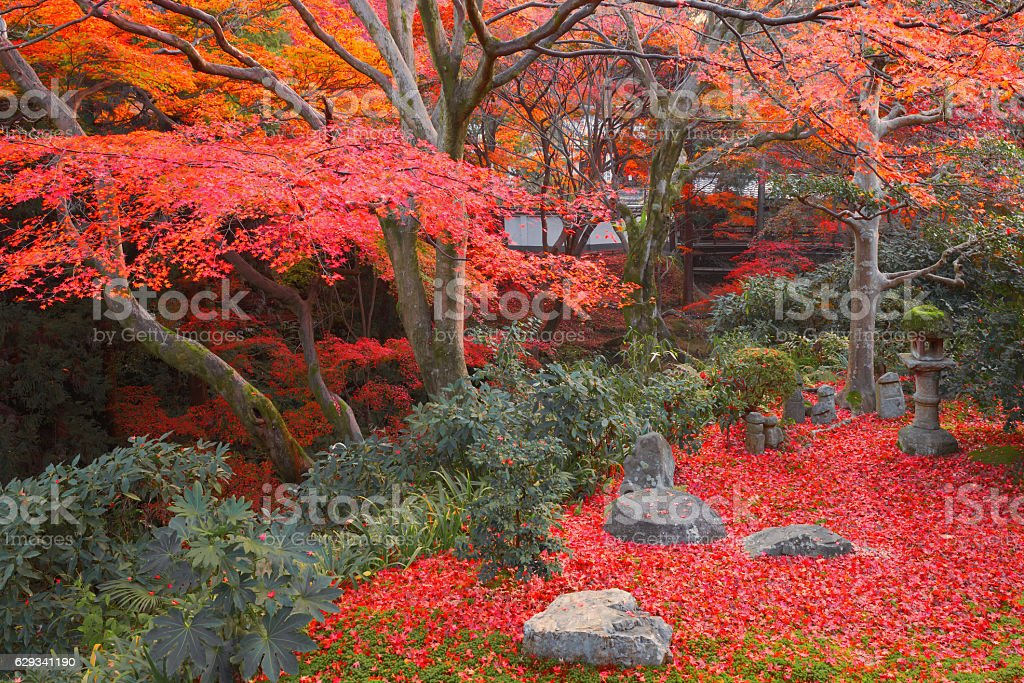 Japanese gaden stock photo