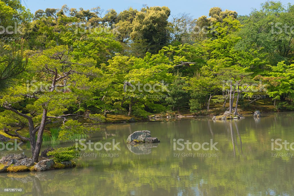 Japanese garden and a lake travel in japan royalty-free stock photo