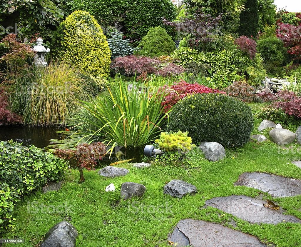 Japanese garden - big kois in the pond stock photo