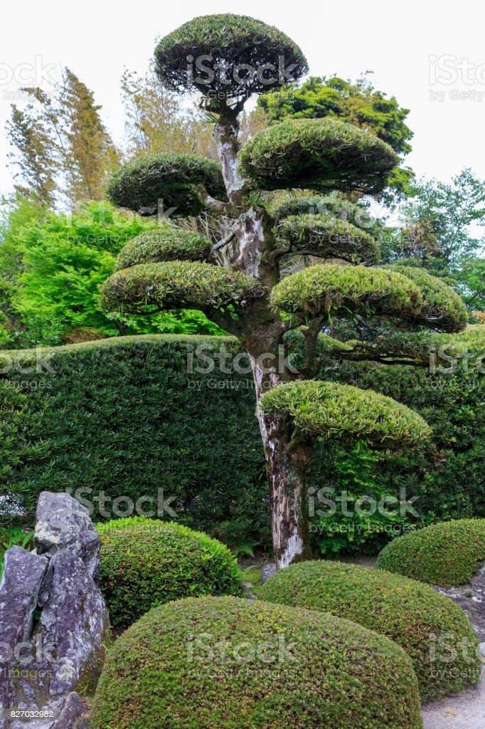 Japanese garden in Chiran Japan stock photo