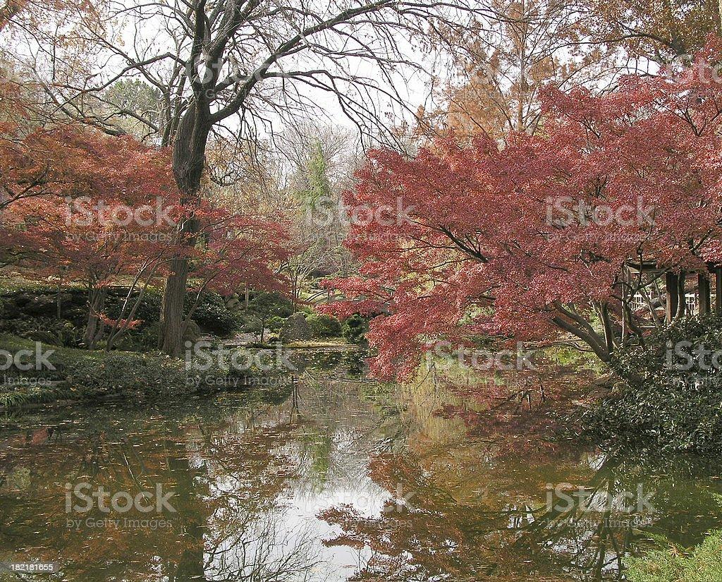 Japanese Garden in December royalty-free stock photo