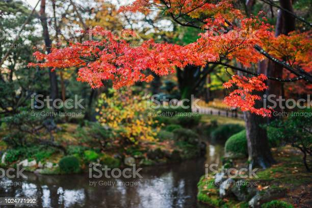 Photo of Japanese Garden in Fall Colours