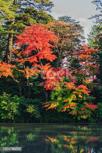 Beautiful waterfall and autumn coloured trees in a Japanese garden