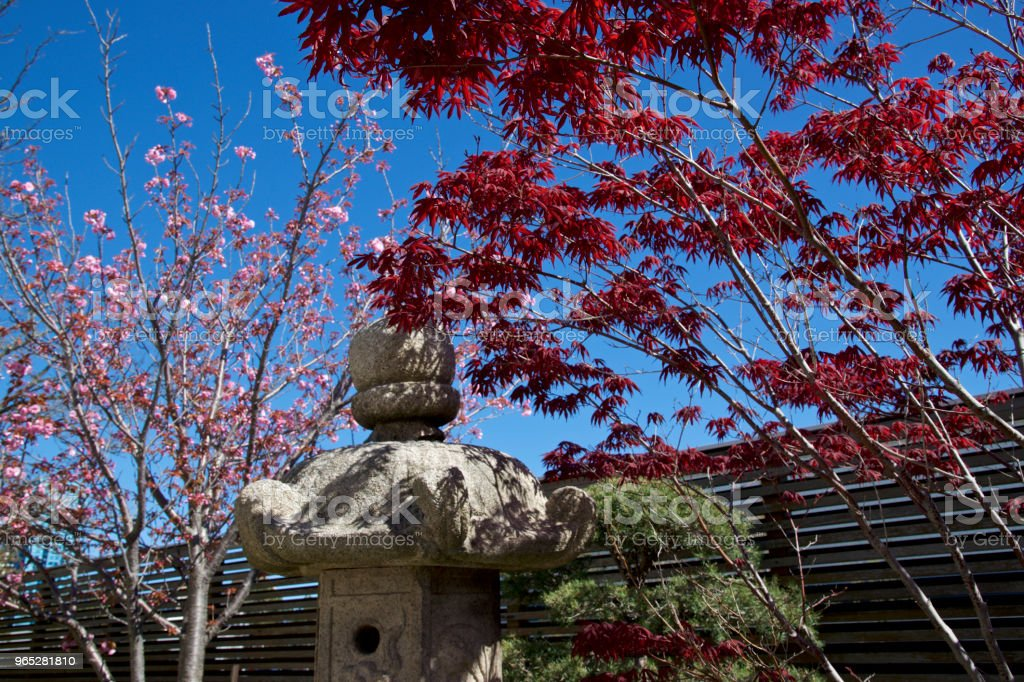 Japanese garden in spring time royalty-free stock photo