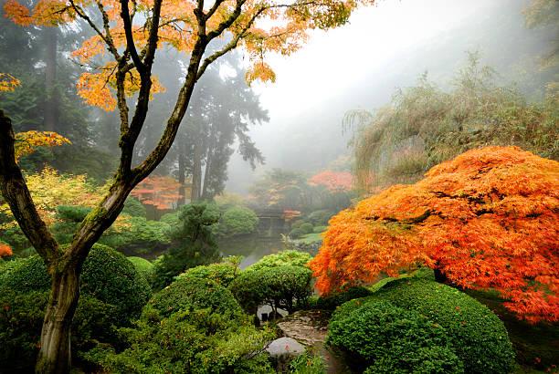 japanischer garten im nebel - japanischer garten stock-fotos und bilder