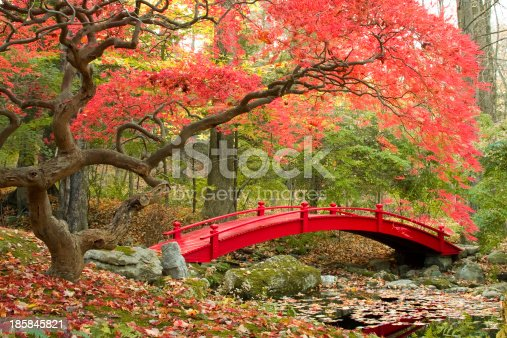 Red Japanese Maple tree and red bridge in beautiful Asian garden.