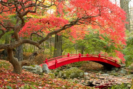 Jardín Japonés Foto de stock y más banco de imágenes de Aire libre