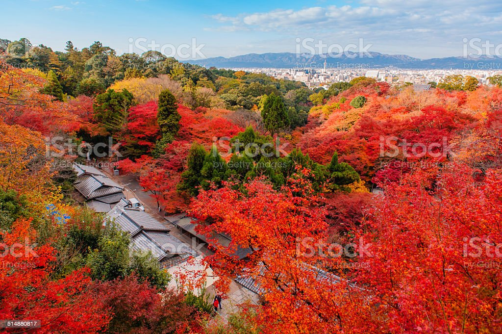 Japanese garden with autumn colored leaves stock photo