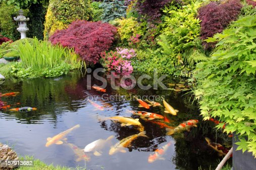 Japanese garden with koi fish stock photo more pictures for Japanese garden fish