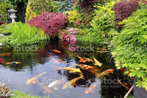 Photo of Japanese garden with koi fish