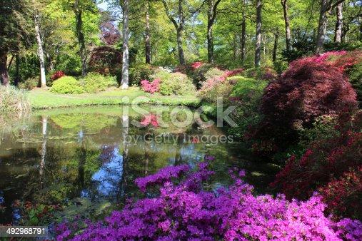 Giapponese giardino con laghetto di carpe maples azalee e for Laghetto giapponese