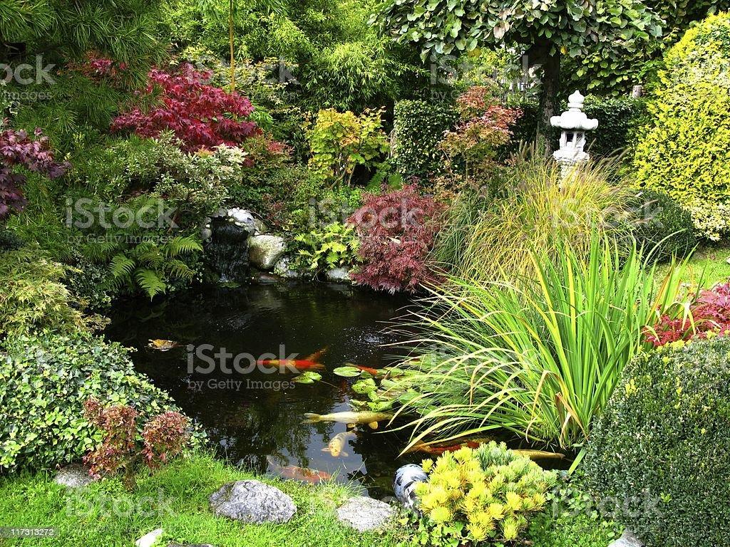 Laghetto Con Cascata Da Giardino : Giapponese giardino con laghetto di carpe fotografie stock e altre