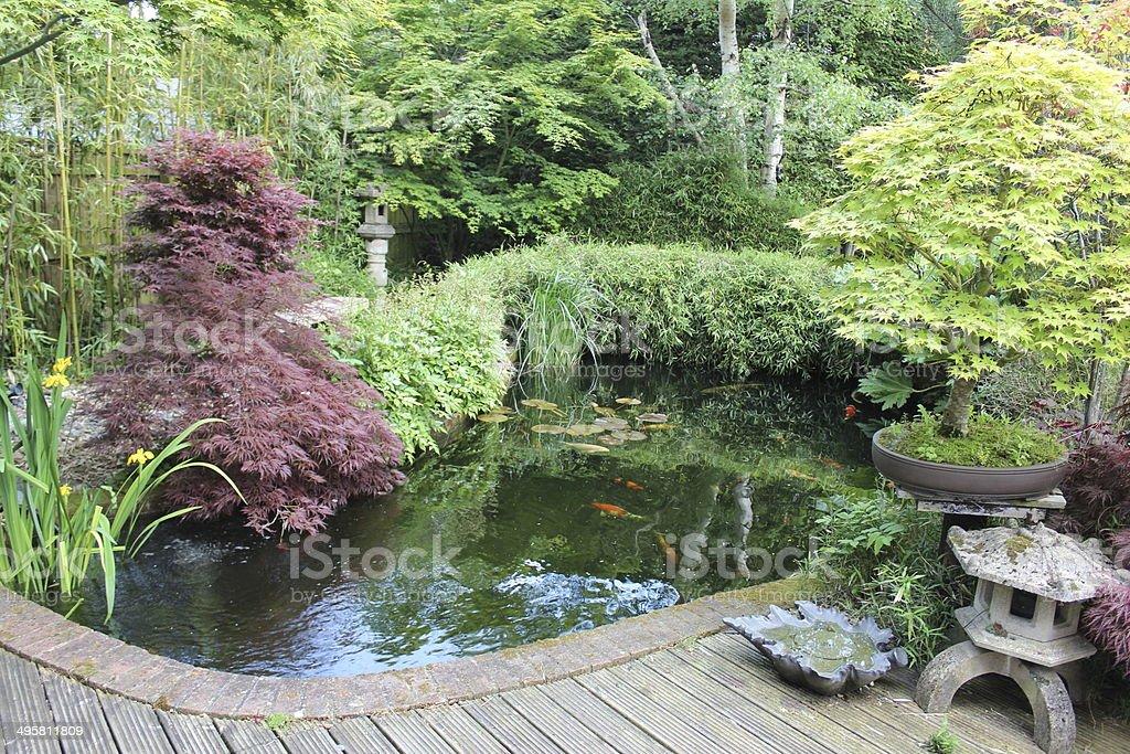 Giardino giapponese con grande laghetto con carpe koi for Laghetto carpe koi