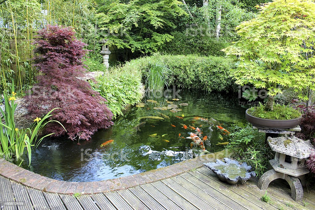 japanese garden with large koi pond lantern bamboo maples bonsai royalty