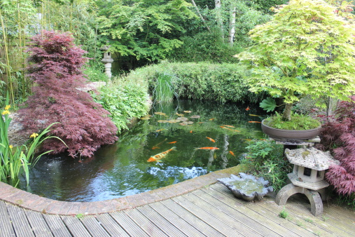 Giardino giapponese con grande laghetto con carpe koi for Laghetto giapponese