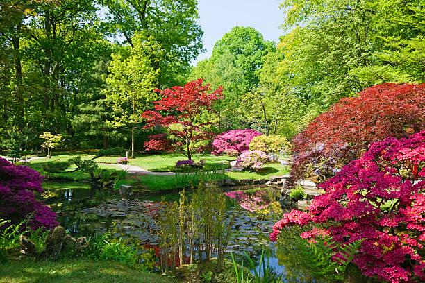 jardim japonês # 5 xxxl - jardim do eden - fotografias e filmes do acervo