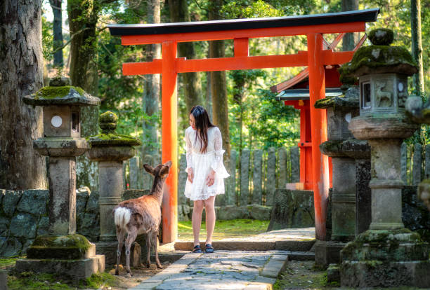 japanese girl and deer in front of torii at Nara Park, Japan March 27, 2019 - Nara, Japan: asian girl looking a deer at Nara Park torii gate stock pictures, royalty-free photos & images