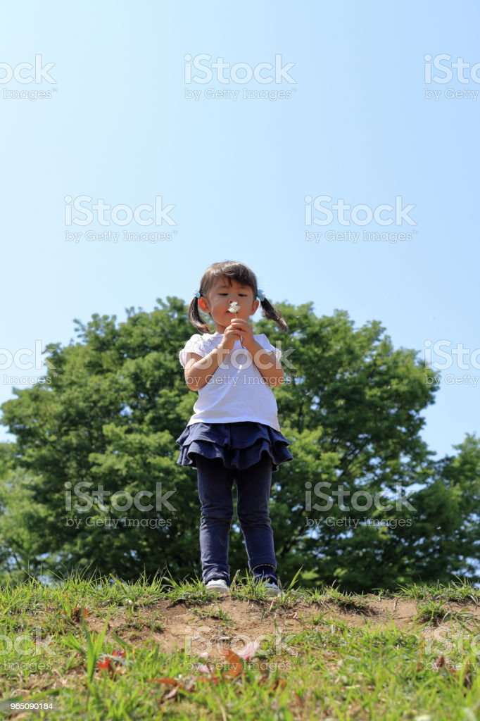 Japanese girl blowing dandelion seeds under the blue sky (3 years old) royalty-free stock photo