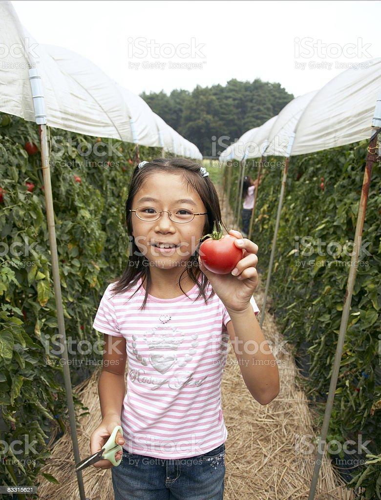 Ragazza giapponese con un pomodoro foto stock royalty-free