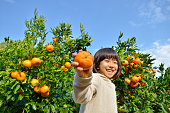 Japanese girl picking orange