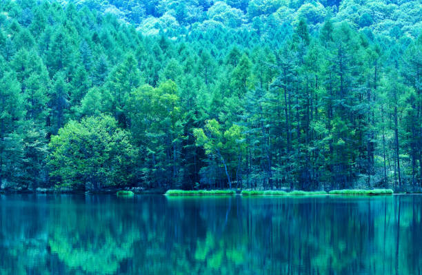 Japanese green pond Japanese green pond satoyama scenery stock pictures, royalty-free photos & images