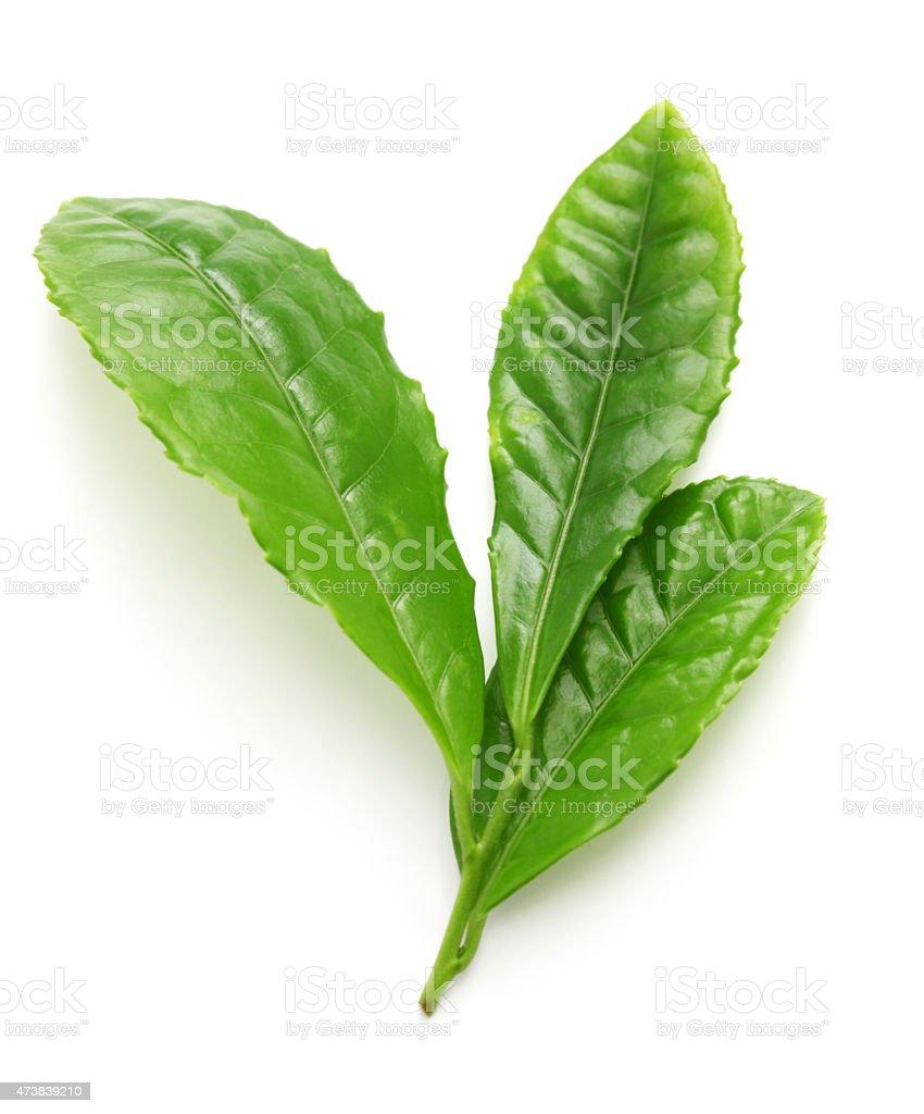 Japanese green tea first flush leaves stock photo