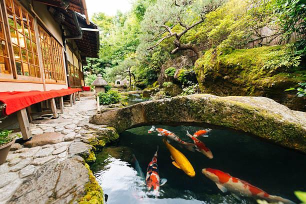 japanese koi pond and garden outside kyoto japan kissaten restaurant - kyoto fotografías e imágenes de stock