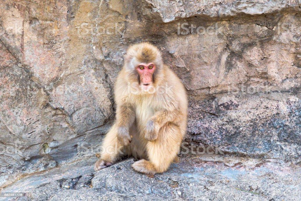 Japonés en mono foto de stock libre de derechos