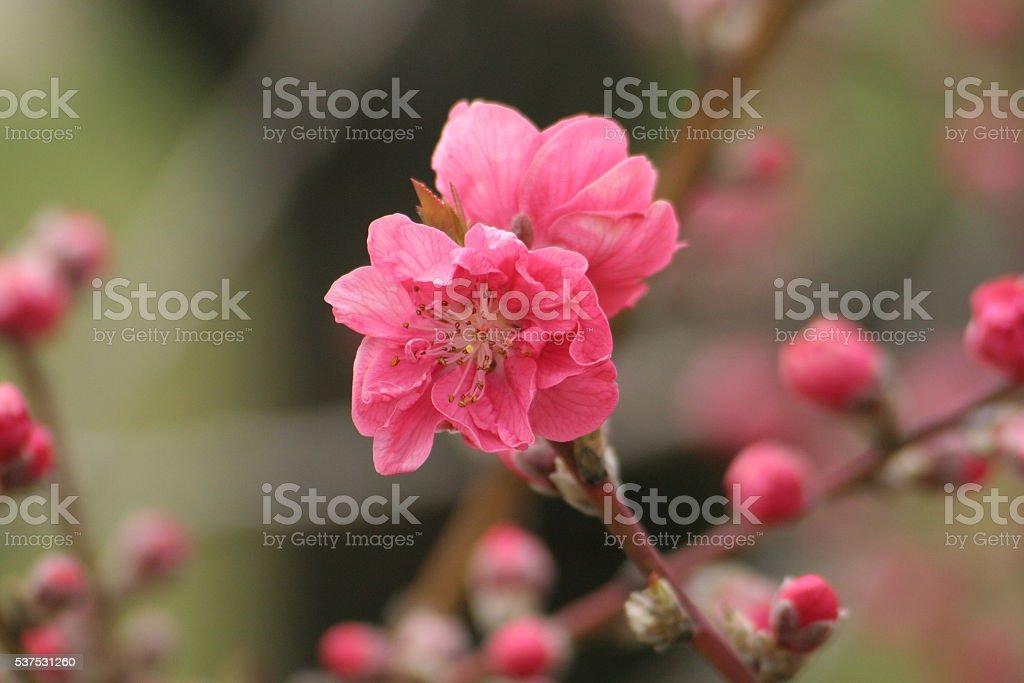 Japanese name, Kanhi Part 1 stock photo