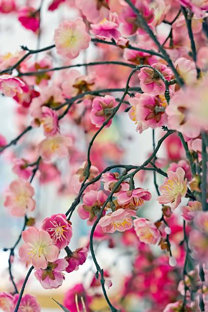 Japanese New Year Decoration stock photo